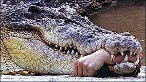 angrier_crocodile