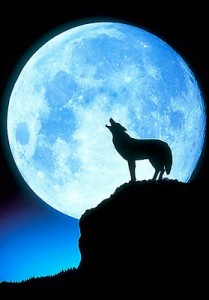 wolf-howling-at-the-moon