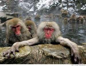 snow-monkey-group